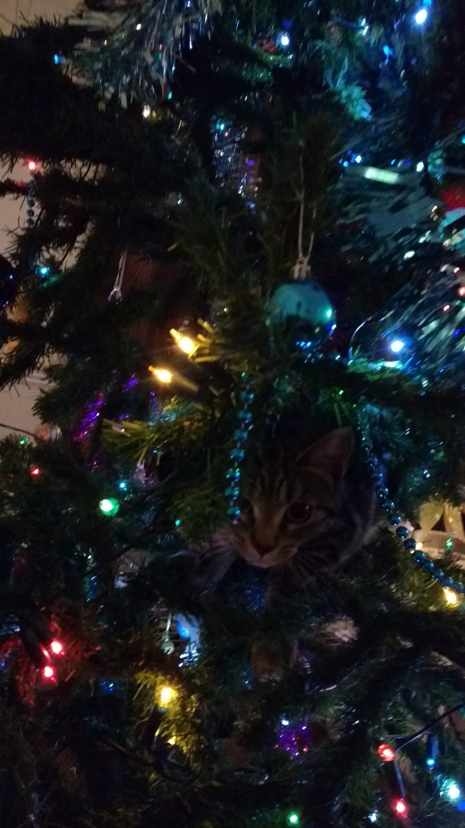 Kitten hiding in Xmas tree