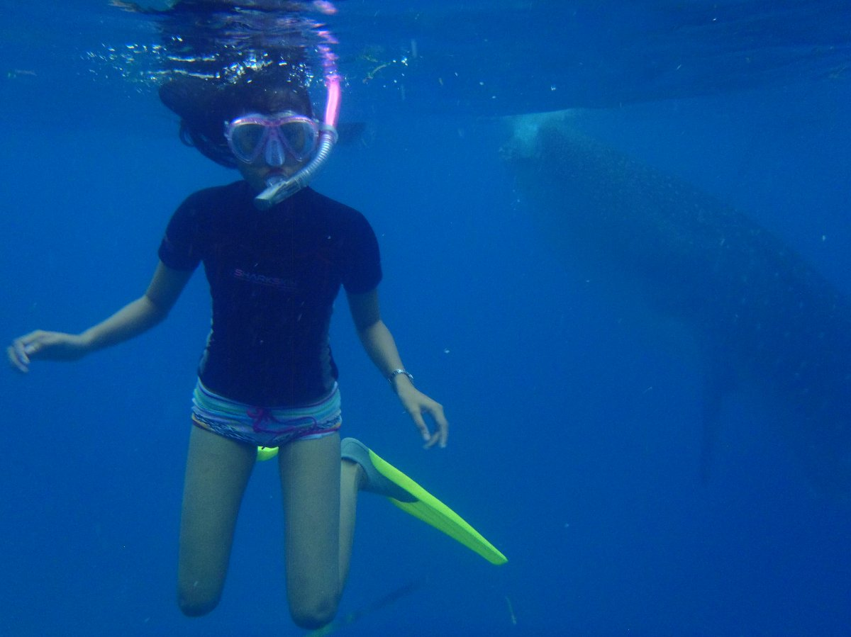 swimming with the world`s largest fish - whale shark!