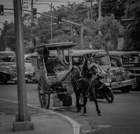 Featuring the Kalesa,  street photo,  bnw photography