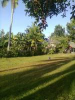 mornings in bohol green is life love nature