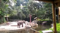 Elephants Polar Bear #SingaporeZoo #Landscape