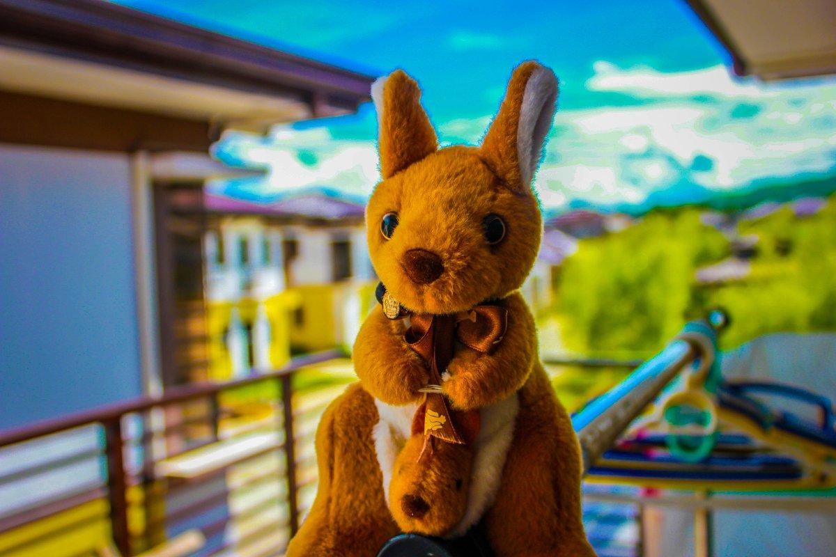#bunny, #photography, #amateur