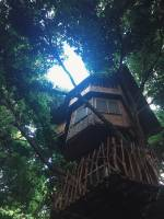 Tree house, forest, foliage