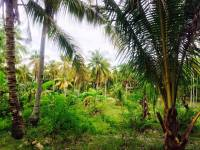 coconut, trees, love, nature