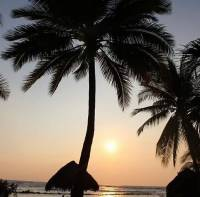 sunset, coconut tree