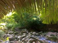 River, nature, ecology, forest, cebu city, phillipines