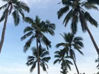 Coconut trees #refreshment #outdoor