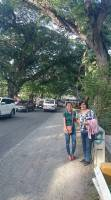 Gigantic centennial Acacia trees, with mama