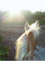 Horse riding, sun, winter, evening, hack, fun