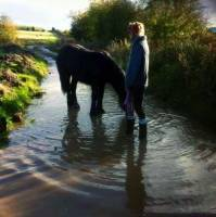 Pony, water, rain, farm, Horse,