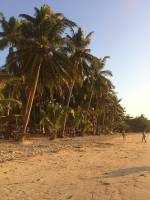 Beach, Coconut Trees, Chill