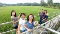 Nature, Rice Field, Family, Green Environment