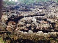 #scapegoat, #rock, #climbing