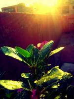 My plant and the sunlight