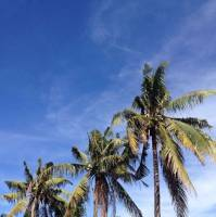#coconut #nature # sky #niceview