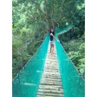 Hanging Bridge, Coal Mountain Resort, Argao, Cebu, Philippines